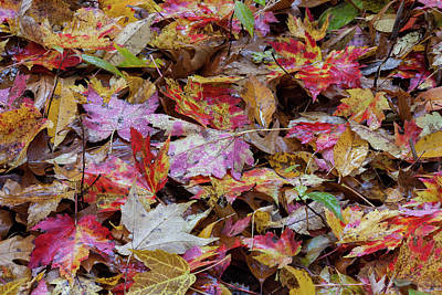 Photograph - Autumn Ground Cover by David Watkins