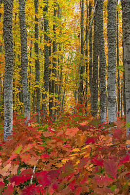 Photograph - Autumn Grove by Dustin  LeFevre