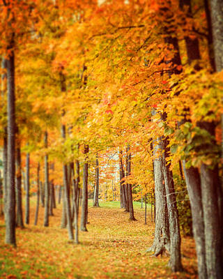 Autumn Grove  Art Print by Lisa Russo