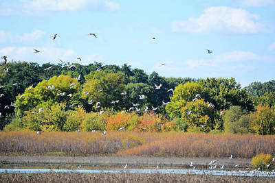 Photograph - Autumn Gulls 2 by Bonfire Photography