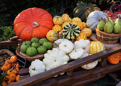 Photograph - Autumn Harvest 1 by Shirley Mitchell
