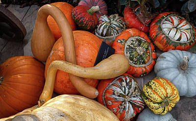 Photograph - Autumn Harvest 2 by Shirley Mitchell