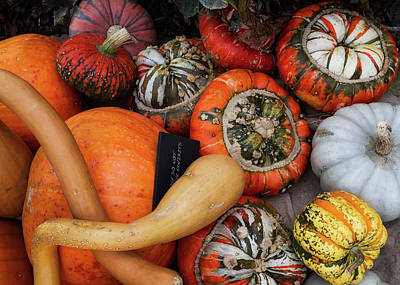 Photograph - Autumn Harvest 3 by Shirley Mitchell