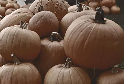 Photograph - Autumn Harvest by JAMART Photography