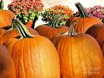 Photograph - Autumn Harvest by Janice Drew