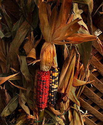 Photograph - Autumn Harvest by Kathleen Stephens