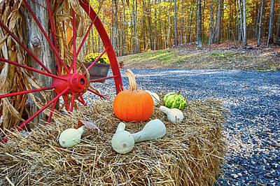 Photograph - Autumn Harvest by Lara Ellis