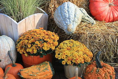 Photograph - Autumn Harvest- Mums Pumpkins And Gourds by Dora Sofia Caputo Photographic Design and Fine Art