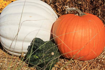 Photograph - Autumn Harvest - Pumpkins And Gourd by Dora Sofia Caputo Photographic Design and Fine Art