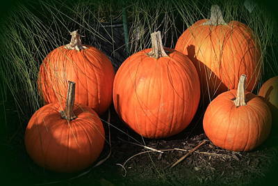 Photograph - Autumn Harvest - Pumpkins by Dora Sofia Caputo Photographic Design and Fine Art