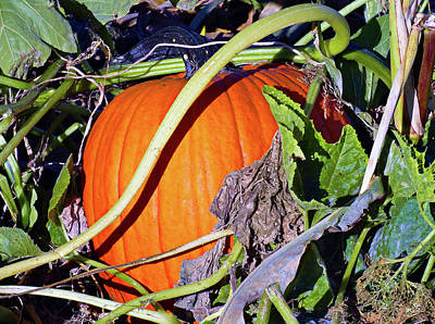 Photograph - Autumn Harvest Study 2 by Robert Meyers-Lussier