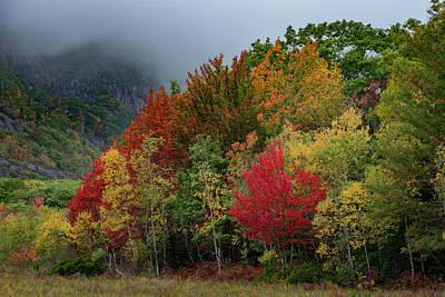 Photograph - Autumn Has Arrived by Gary Lengyel