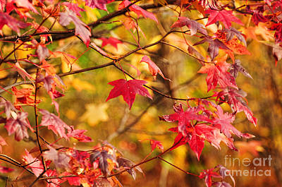 Realism Photograph - Autumn Has Arrived by Paul Ward