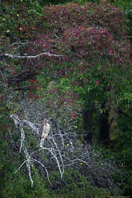 Photograph - Autumn Hawk Portrait by Bill Wakeley