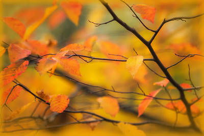 Photograph - Autumn Haze by Carolyn Derstine