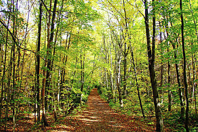 Photograph - Autumn Hike Killarney by Debbie Oppermann