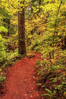Photograph - Autumn Hike by Loree Johnson