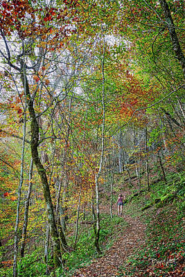 Photograph - Autumn Hiking Trail by David A Lane