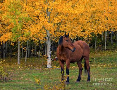 Photograph - Autumn Horse by Mike Dawson
