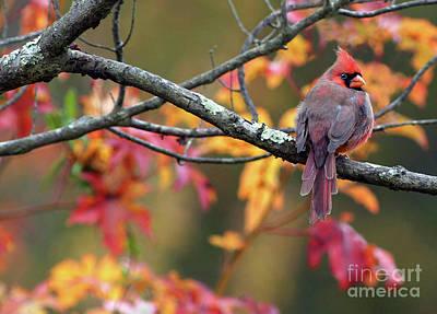 Photograph - Autumn Hues by Art Cole
