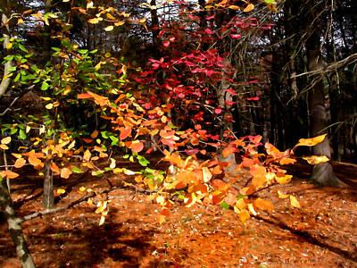Painting - Autumn Hues by Paul Sachtleben