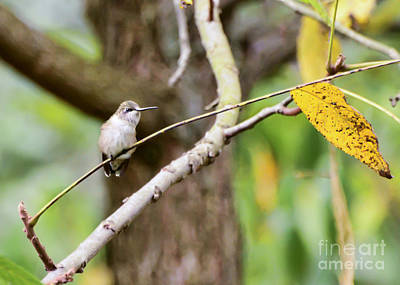 Autumn Leaf Photograph - Autumn Hummingbird by Kerri Farley