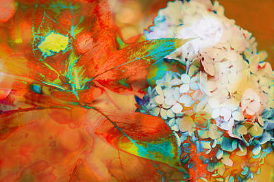 Photograph - Autumn Hydrangea Burnt Orange by Suzanne Powers