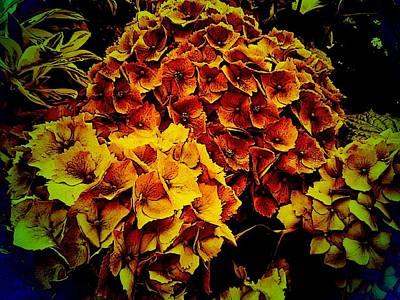 Digital Art - Autumn Hydrangea by Nancy Pauling