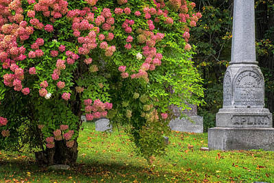 Photograph - Autumn Hydrangeas by Tom Singleton
