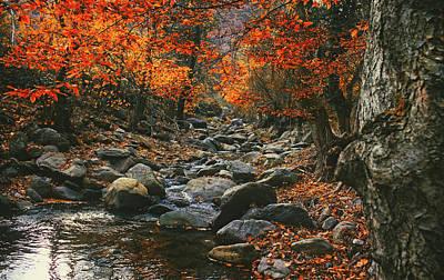 Photograph - Autumn Idyll by Dan Musat