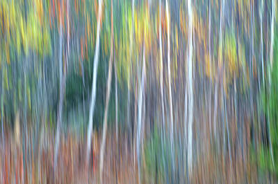 As Art Photograph - Autumn Impression by Bill Morgenstern