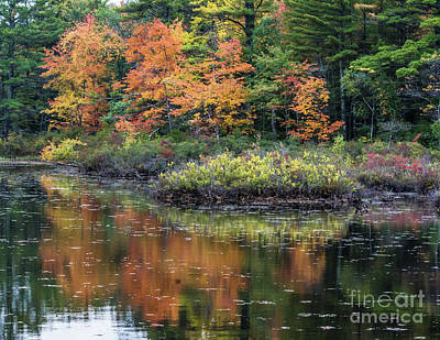 Photograph - Autumn Impression by John Greco