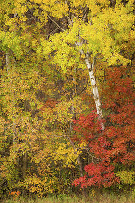 Photograph - Autumn Impressions by Penny Meyers