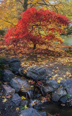 Photograph - Autumn In A Japanese Garden by Angie Vogel