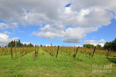 Autumn In A Vineyard In Tuscany Italy Art Print by DejaVu Designs