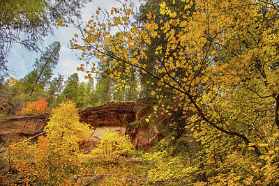 Photograph - Autumn In Arizona by Kunal Mehra