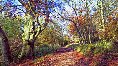Photograph - Autumn In Ashridge by Anne Kotan