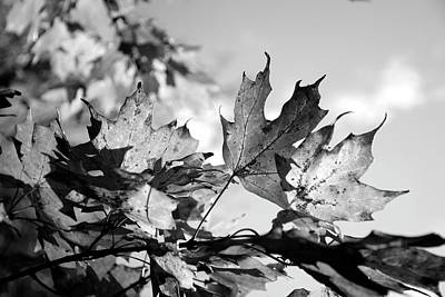 Photograph - Autumn In Black And White 2 by Angie Tirado