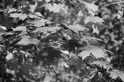 Photograph - Autumn In Black And White 3 by Angie Tirado