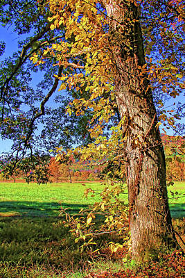 Photograph - Autumn In Cades Cove by HH Photography of Florida