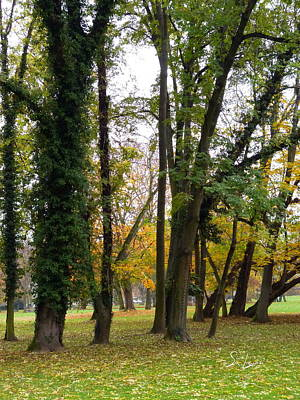 Photograph - Autumn In City Park Nature Photography by S Art