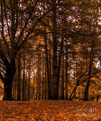 Autumn In Colligan Wood Art Print