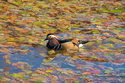 Autumn In Creek Mix Art Print by Leif Sohlman