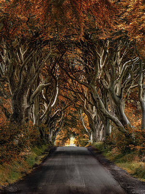 Photograph - Autumn In Dark Hedges by Jaroslaw Blaminsky
