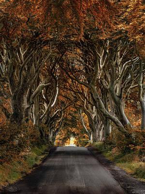 Photograph - Autumn In Dark Hedges by Jaroslaw Blaminsky