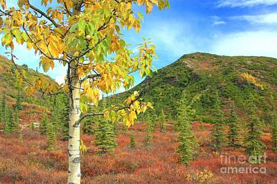 Photograph - Autumn In Denali by Frank Townsley
