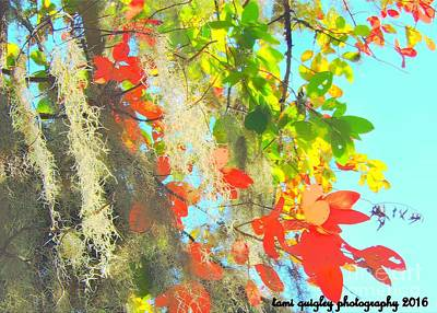 Carry On Art Photograph - Autumn In Dixie  by Tami Quigley