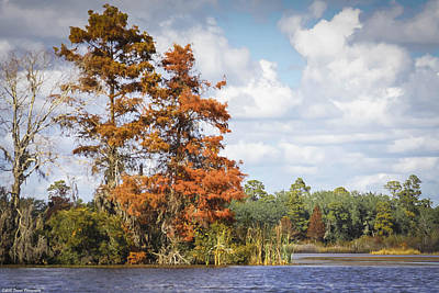 Photograph - Autumn In Florida 2 by Debra Forand