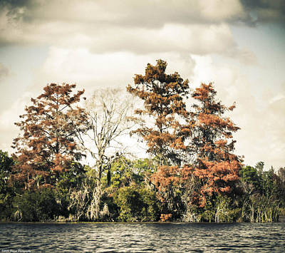 Photograph - Autumn In Florida by Debra Forand