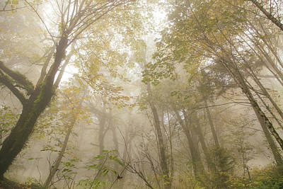 Photograph - Autumn In Forest Park by Kunal Mehra